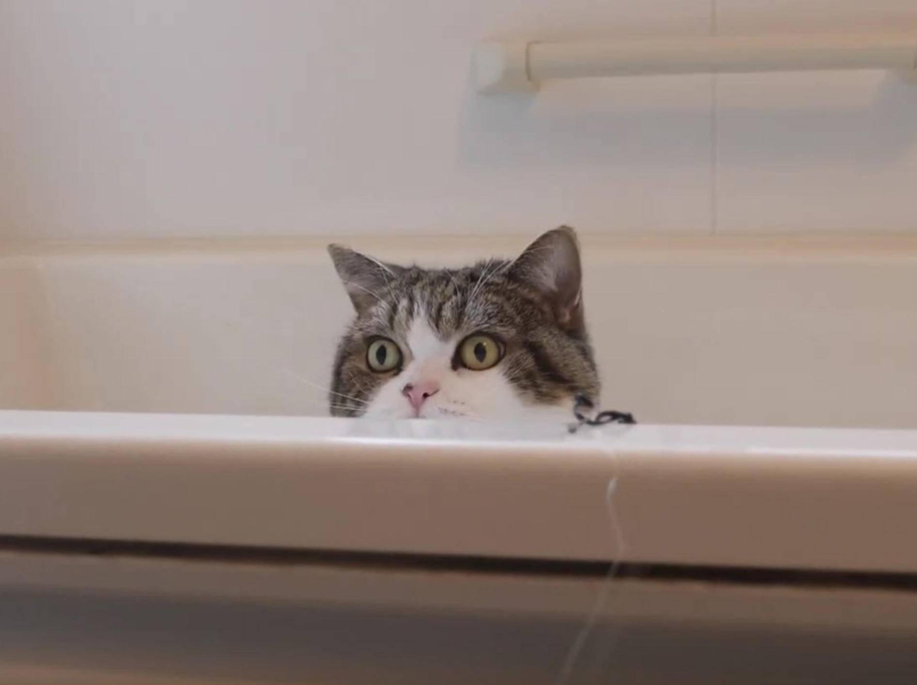 Kater Maru spielt in der Badewanne – YouTube / mugumogu