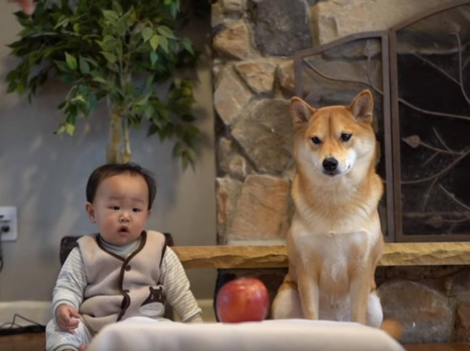 Wer kann sich mehr in Geduld üben? - Bild: YouTube / Haru the Shiba Inu