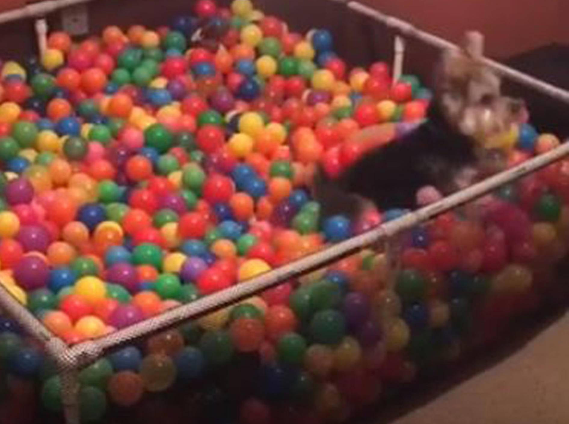 Hund hat Spaß im Bällebad - Bild: YouTube / LADbible