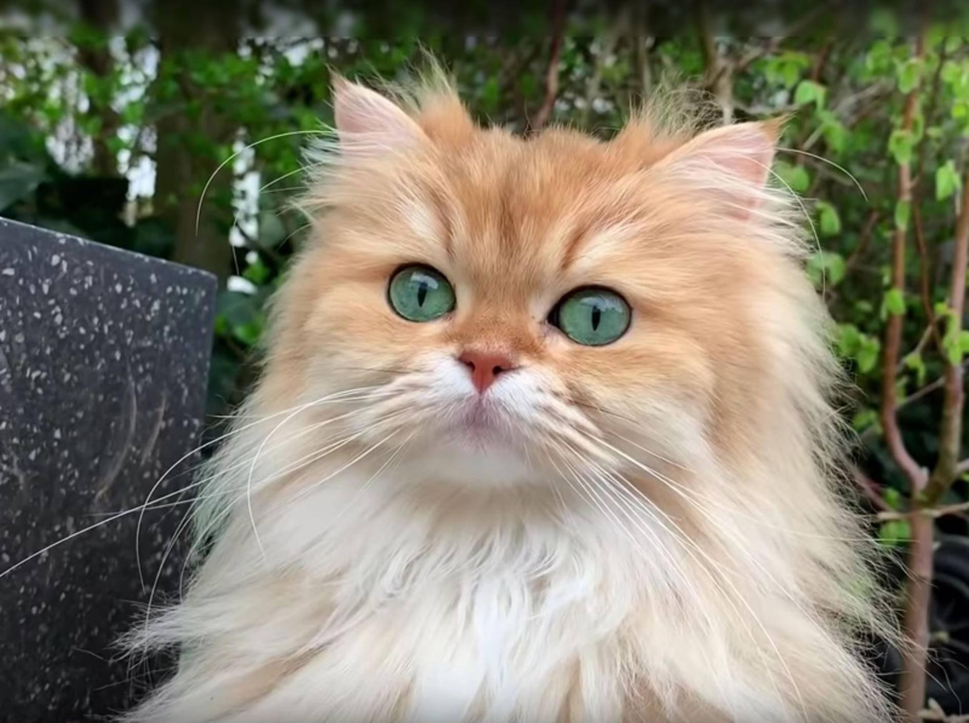 Flauschkatze Smoothie bei ihrem ersten Gartenausflug – YouTube / smoothiethecat