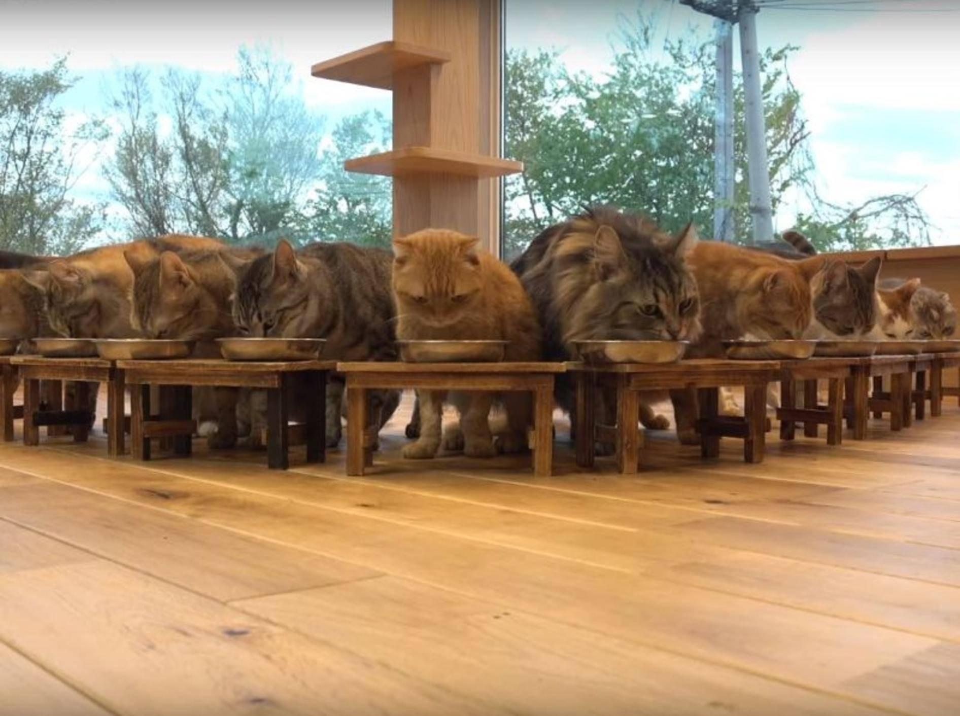 Vorstellungsrunde: So heißen die Bewohner der japanischen Katzen-WG – YouTube / 10 Cats.+