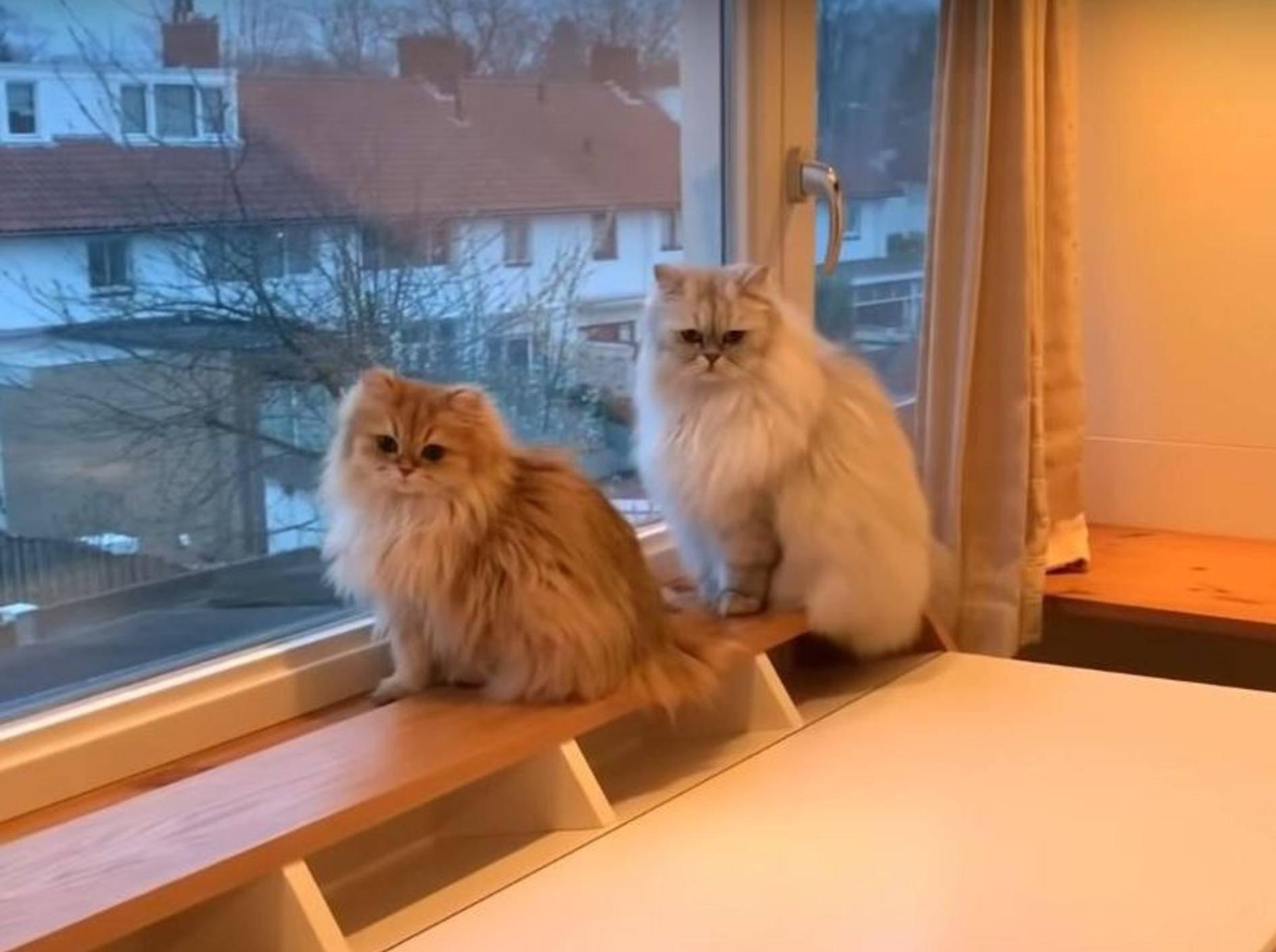 Smoothie und Milkshake erkunden ihr neues Zuhause – YouTube / smoothiethecat