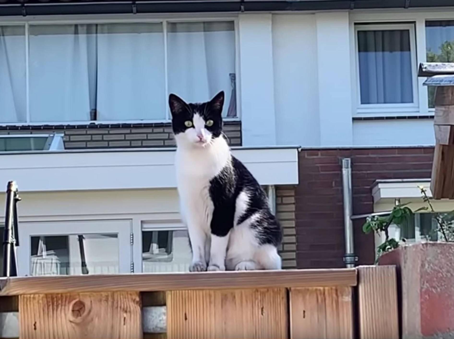 Smoothie und Milkshake treffen auf die Nachbarskatze – YouTube / smoothiethecat