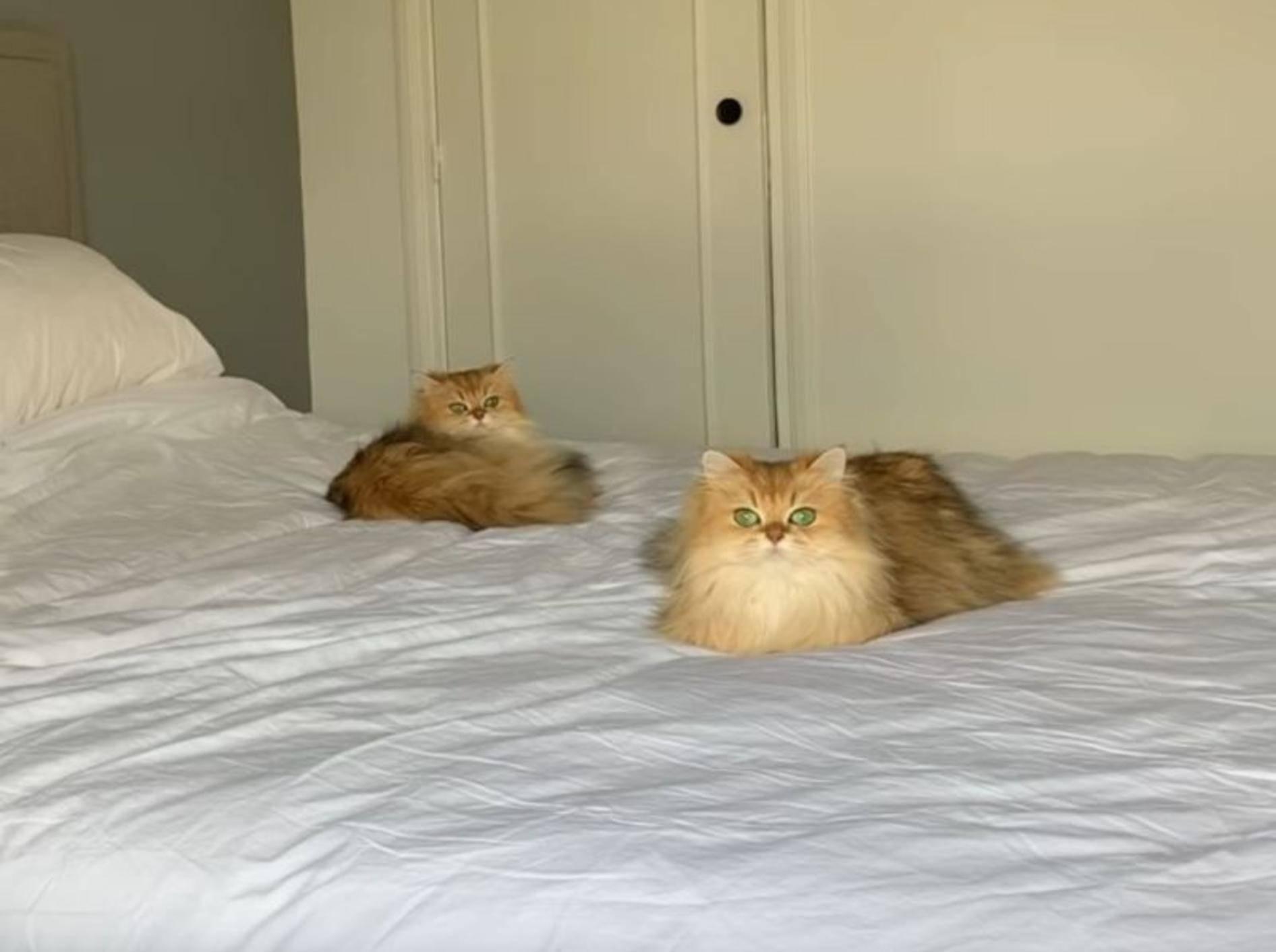 Flauschkatzen Smoothie und Milkshake: Plötzlich Klon? – YouTube / smoothiethecat