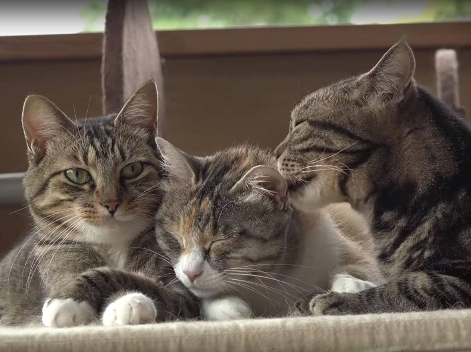 Wellness-Session in japanischer Katzen-WG – YouTube / 10 Cats.+
