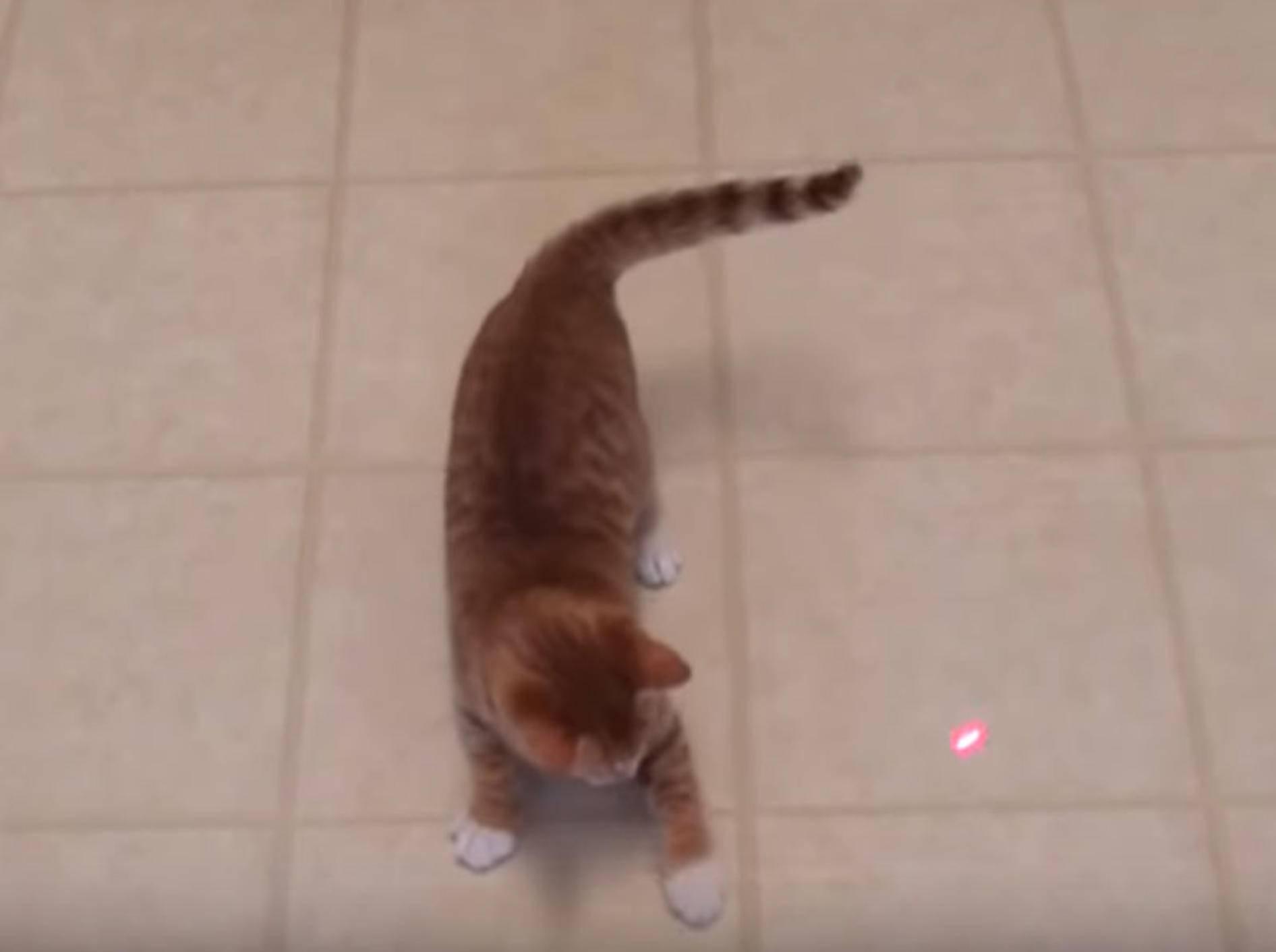 Dem Laserpunkt hinterher jagen - das können Cole und Marmalade gut - Bild: YouTube / Cole and Marmalade