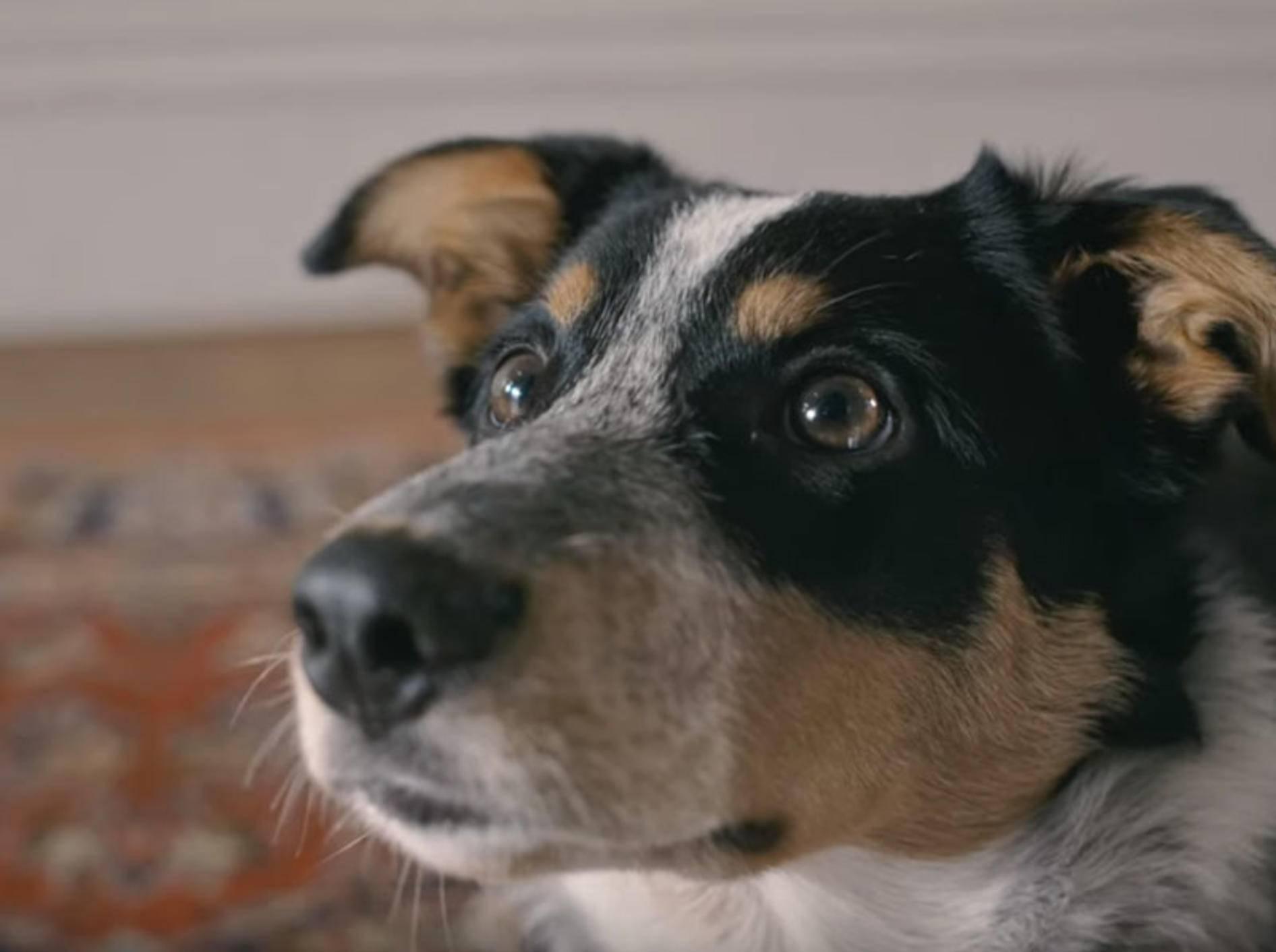 Passivrauchen schadet Hunden, Katzen und Co. - Bild: YouTube / Quitline New Zealand