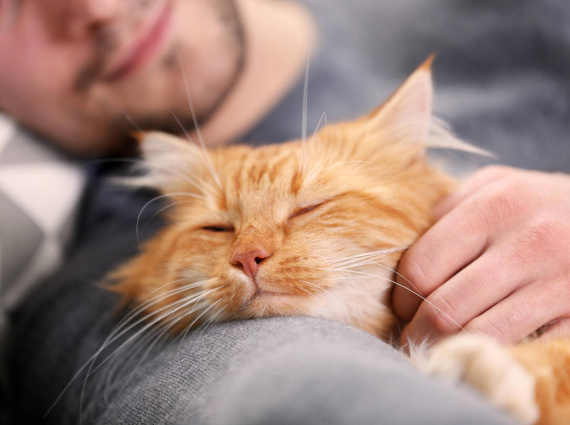 Zählt das, was ein Twitter-User mit seiner Katze erlebt hat, noch zu Kuscheln? - Bild: Shutterstock / Studio Africa