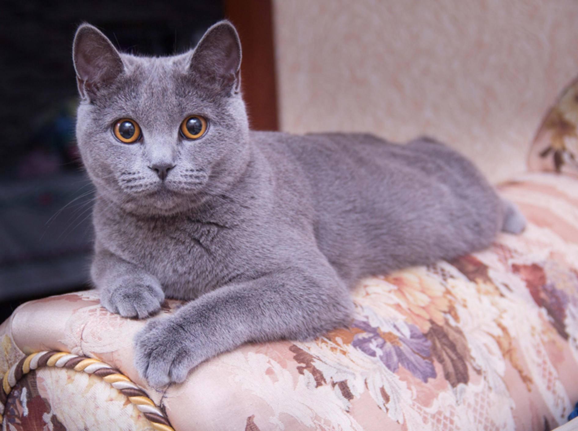 Katzen verstehen ihren Namen - ob sie jedoch hören, das ist eine andere Frage - Bild: Shutterstock / Lena9208