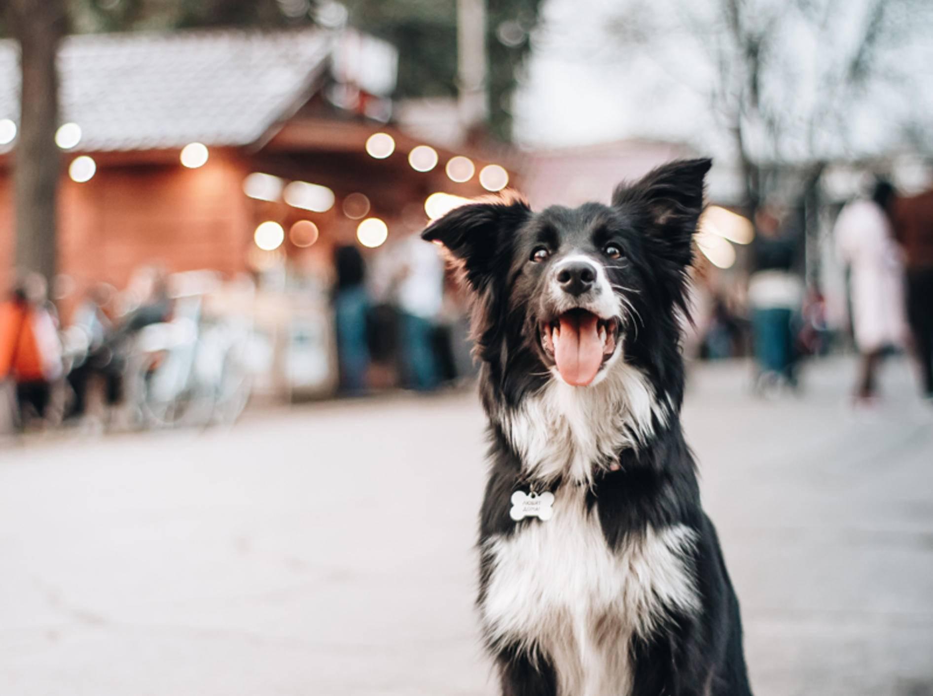 Mit dem Hund zum Weihnachtsmarkt - ja oder nein? - Bild: Shutterstock / Ovchinnikova-Stanislava