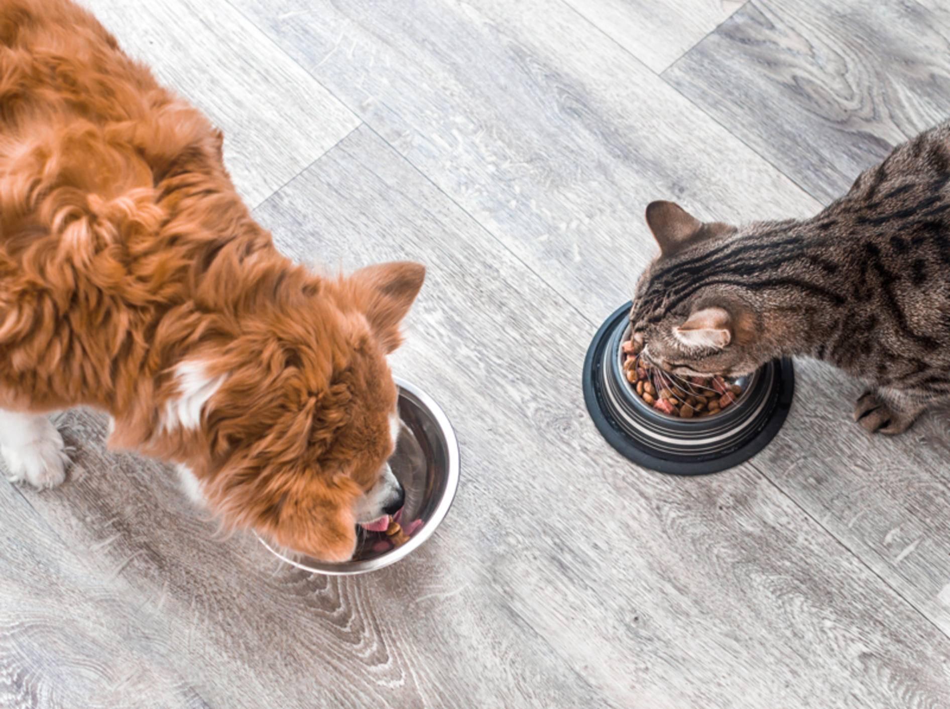 Dank Futtercheck müssen Sie nie wieder das falsche Futter kaufen - Bild: Shutterstock / Anastasiya Tsiasemnikava