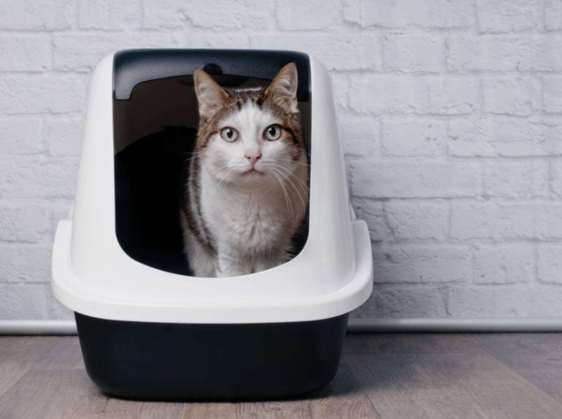Ein Katzenklo mit Deckel kann Vorteile haben - Bild: Shutterstock / Lightspruch