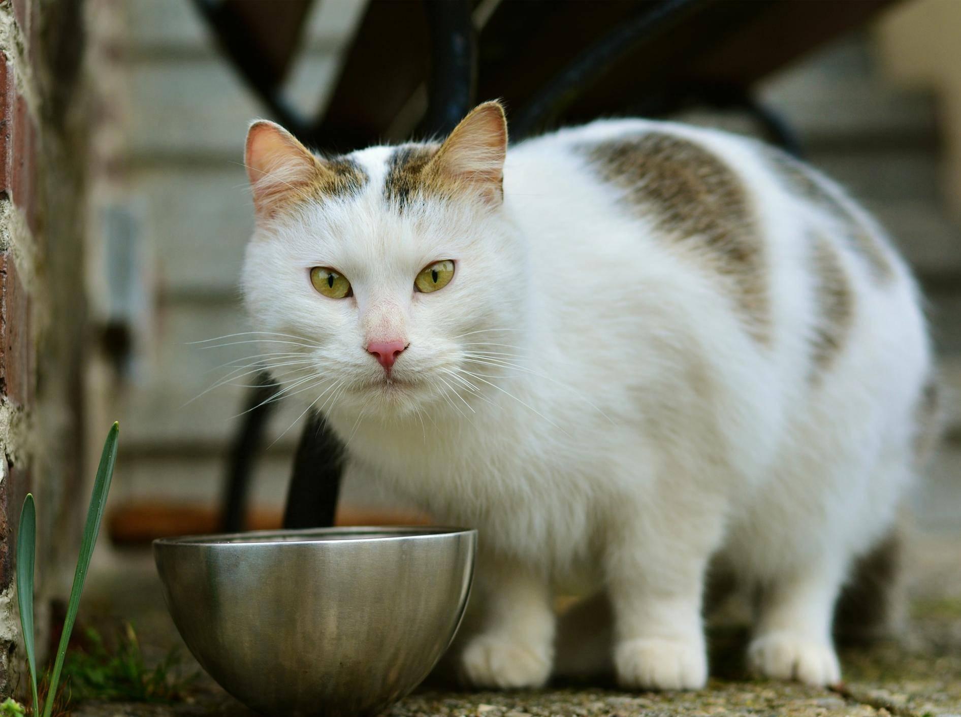 Katze frisst kein Nassfutter mehr