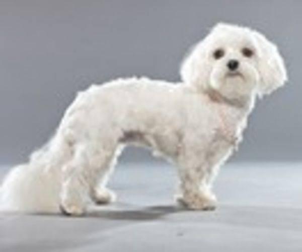 kleinster hund der welt gewicht