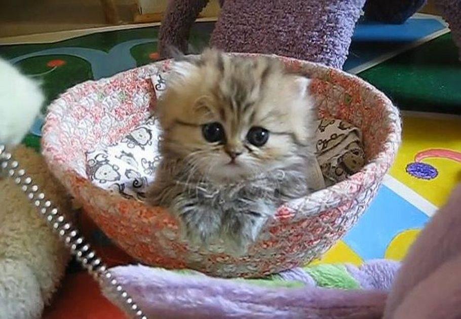 die süßeste katze der welt