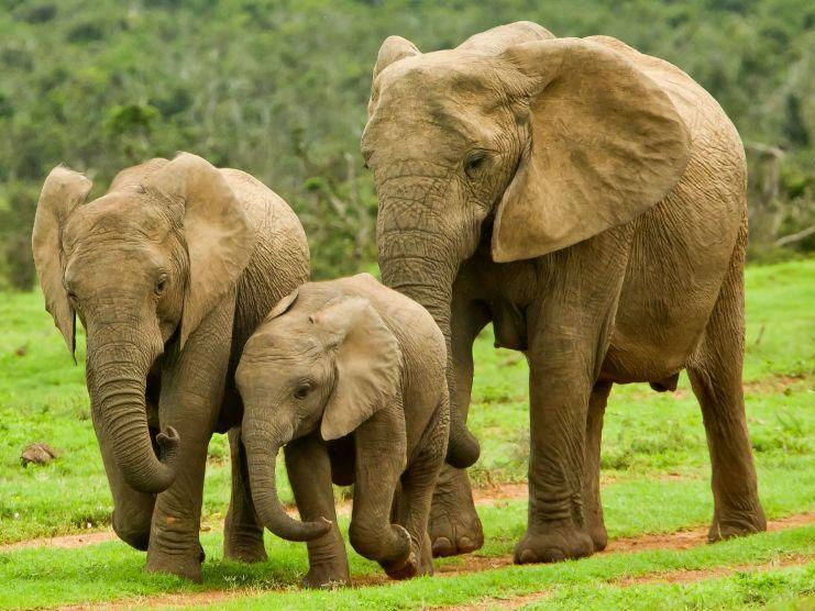 Elefanten Bilder