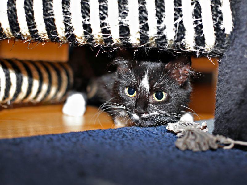 Was Tun, Wenn Die Katze Eifersüchtig Ist?