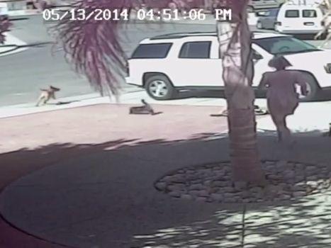 Katze Rettet Kind Vor Hund