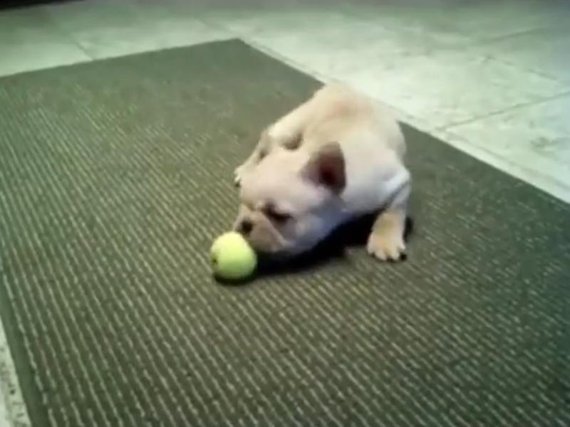 Hundewelpen Spiele