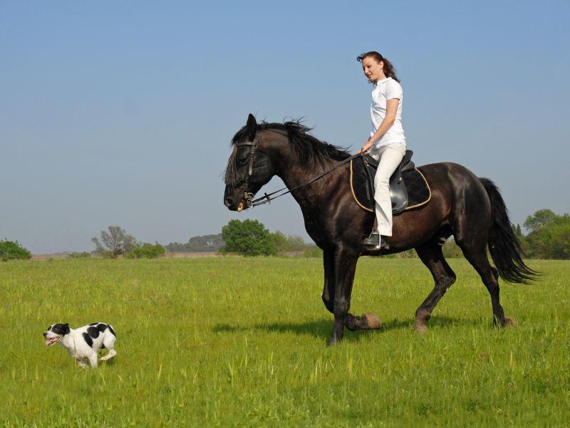 ausritt mit pferd und hund sicherheitstipps