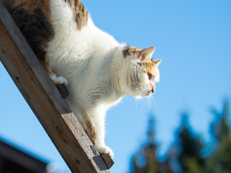 katzentreppe f r balkon und fenster praktisch f r freig nger